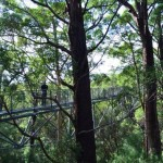 Valley of the Giants, treetop walk