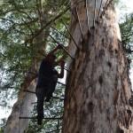 Dave climbing the Bicentennial Tree