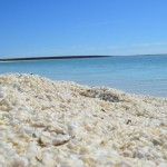 Shell Beach, Shark Bay near Monkey Mia