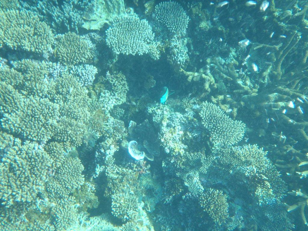 Whale Shark tour, Coral Bay