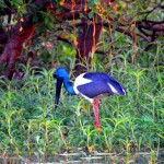Jabiru - Yellow water breakfast cruise. Kakadu