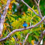 Kingfisher - Yellow water breakfast cruise. Kakadu