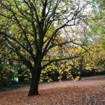 Botanic Gardens, Daylesford VIC