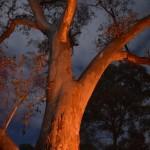 Fireside trees