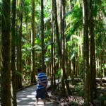 Dad rainforest walking