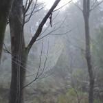 Morning spider webs, Tom Groggin