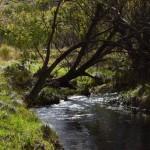 The Victoria River