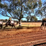 The Camel Cup - Alice Springs