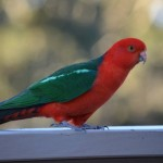 A local parrot at Judy & Bain's