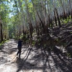 Clearing fallen trees from the Dampier Fire Trail out of the Deua NP