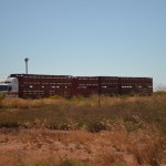 Big cattle truck, The Pilbara