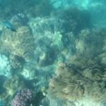 Whitsunday snorkelling